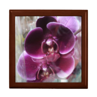Dark Purple Moth Orchids Gift Box