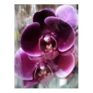 Dark Purple Moth Orchids Postcard