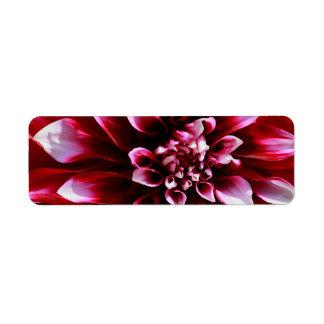 dark red dahlia