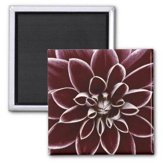 Dark red dahlia flower blossom square magnet