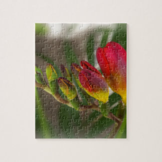 dark red freesia puzzles