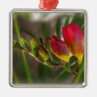 dark red freesia Silver-Colored square ornament