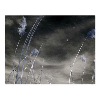 Dark sunny sky/Infrared Photography Postcard