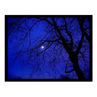 Dark Tree Postcard