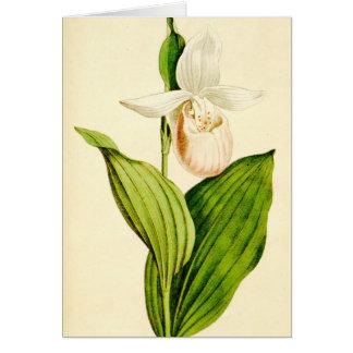 Darling Lady Slipper Card