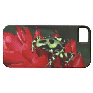 Dart frog 2 case for the iPhone 5