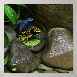 Dart Frog Buddies Poster