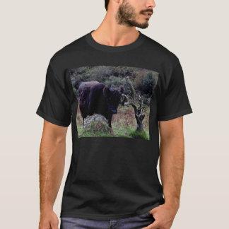 Dartmoor Black Galloway Cow Scratching On Tree T-Shirt