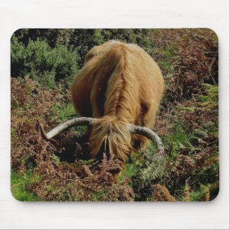 Dartmoor Highland Cow Grazing In Bracken Mouse Pad