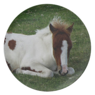 Dartmoor Hill Pony Foal Resting Party Plate