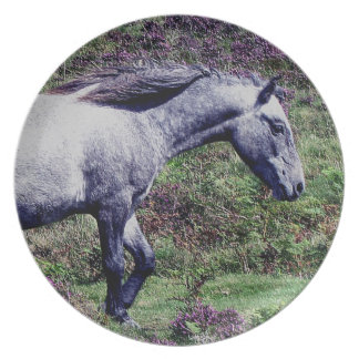 Dartmoor Pony Colt Roaming In The Heather Plate