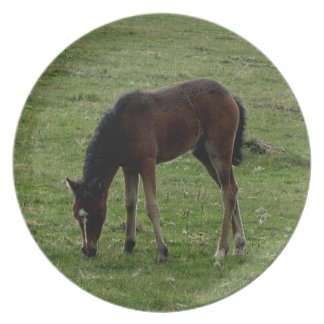 Dartmoor Pony Foal Grazeing Summer.2. Party Plate