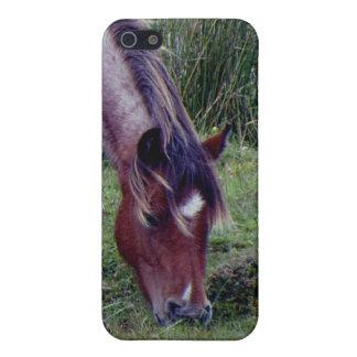 Dartmoor Pony Grazing Early Autumn Case For iPhone 5/5S