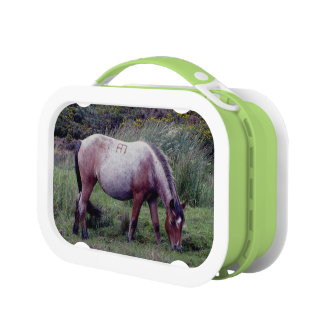 Dartmoor Pony Grazing Early Autumn Lunch Box