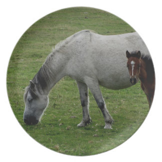 Dartmoor Pony Grey Mare And Foal Grazeing Party Plates