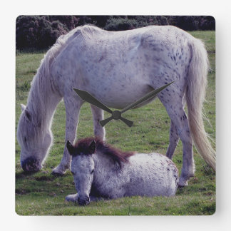 Dartmoor Pony Grey Mare Grazing Foal Resting Wall Clocks