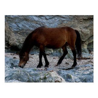 Dartmoor pony in rocks on remote south Devon beach Postcard