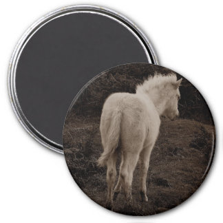 Dartmoor Pony White Foal  (sepia) 3 Inch Round Magnet