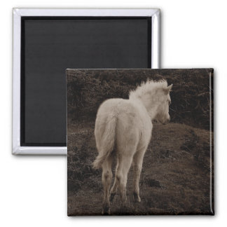 Dartmoor Pony White Foal   ( sepia ) Square Magnet