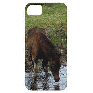 Dartmoor Pony Yearling At Watering Hole iPhone 5 Case