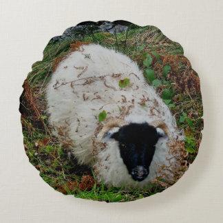 Dartmoor Sheep In Hiding Round Pillow