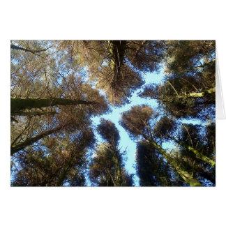 Dartmoor Woods Card