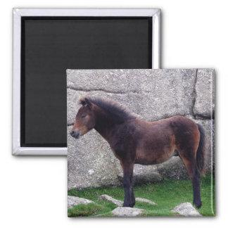 Dartmor Pony Foal Sheltering Bone Hill Rocks Square Magnet