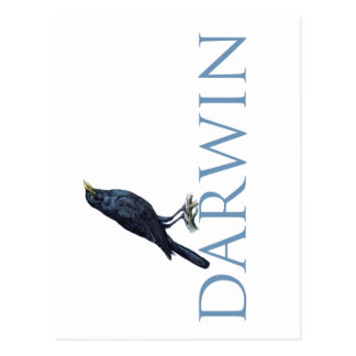 Darwin Postcard