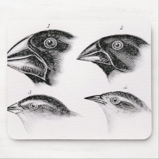 Darwin's bird observations mouse pad