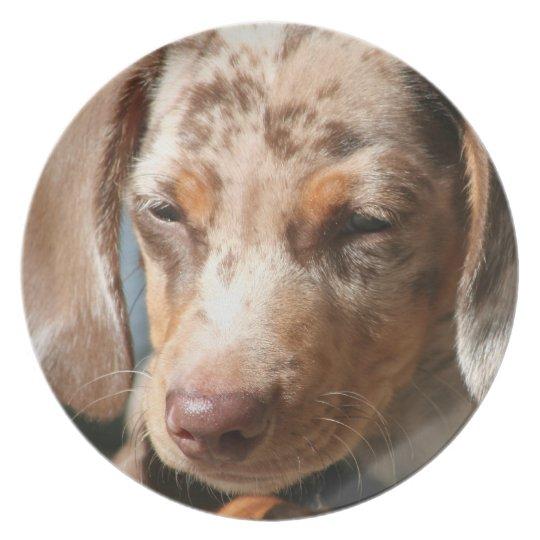 Daschund Dog Plate