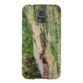 Dash Galaxy S5 Covers