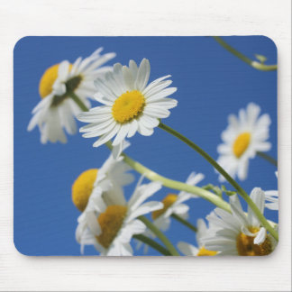 Dasy Flower Mouse Pads