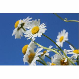 Dasy Flower Photo Cutouts