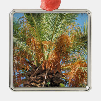 Date palm Silver-Colored square ornament