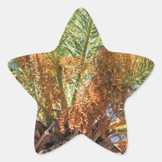 Date palm star sticker