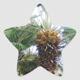 Date Palms Star Sticker