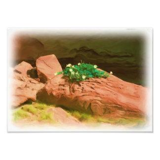 Datura Cavern Photo Print