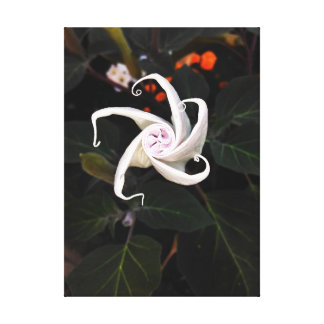 Datura Flower Bud Canvas Print