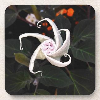 Datura Flower Bud Coaster
