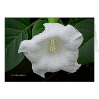 Datura in the Morning Card