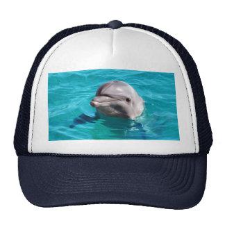 Dauphin en photo de l'eau bleue casquettes