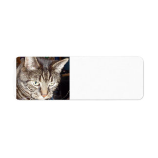 Dave's Watching You Return Address Labels