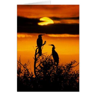 Dawn at Everglades National Park - Anhingas Card