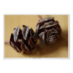 Dawn Redwood Cones Poster