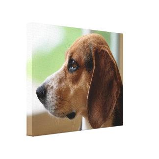 Day Dreaming Beagle Canvas Print