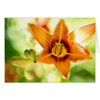 Day Lily Abstract Card
