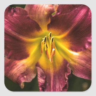 Day Lily Square Sticker