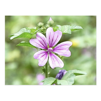 Daybreak - Mallow Flower Postcard