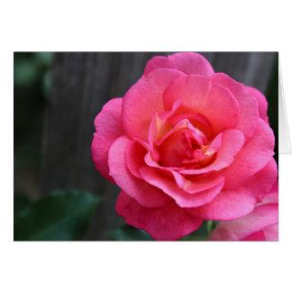 Daydream Rose Card