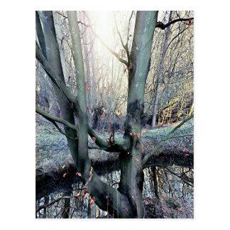 DayDreams - card tree